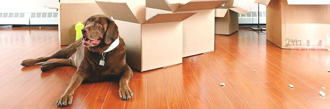 How To Move House With Pets - How to Move House When You Have Pets