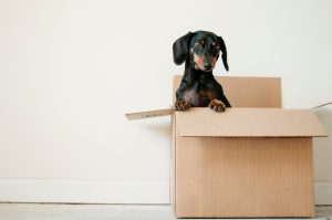 moving pets interstate